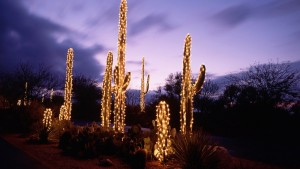 96030__christmas-lights-on-cactus-at-dusk_p